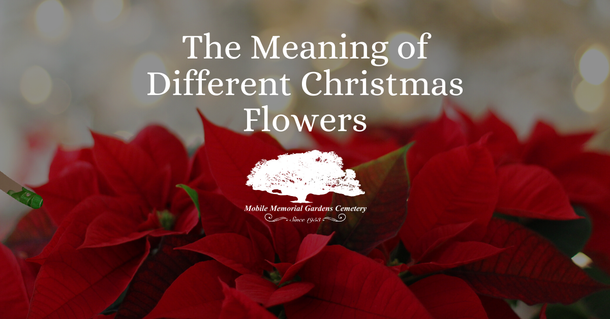 the meaning of christmas flowers